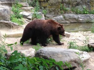 bear bronx zoo