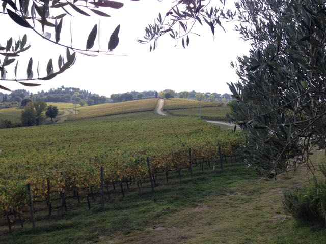 Assisi winery view 2