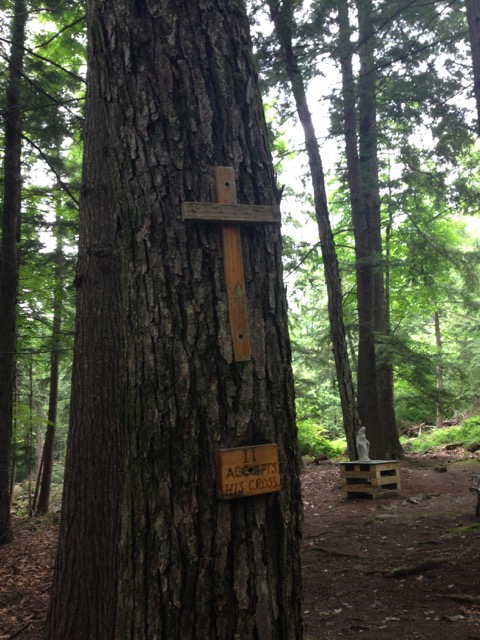 sorrow first tree