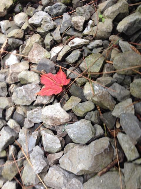 sorrow leaf on gravel