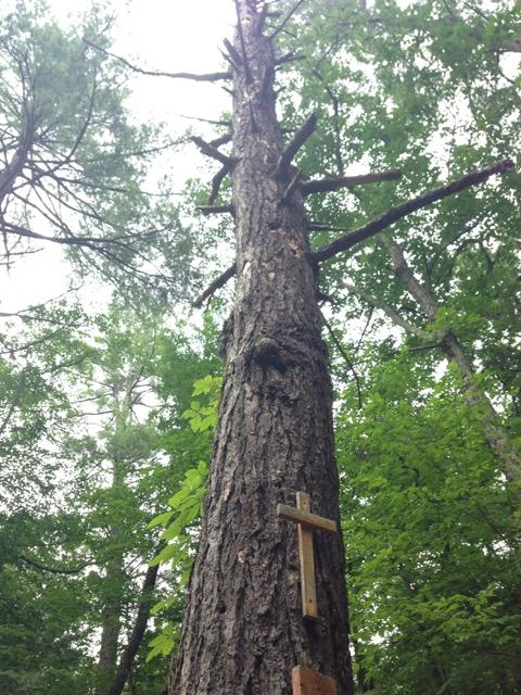 sorrow tree dead